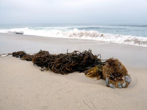 Stilla havet. Digitalfoto, 2008.